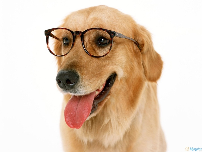 dog_with_reading_glasses_1600x1200