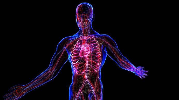 circulatory-system_nya1xeqeg__F0000