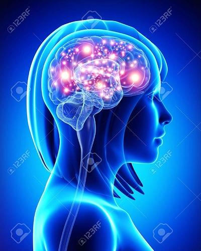 15181717-female-active-brain
