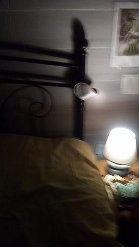 GhostCamera_01-42-57_13-06-18