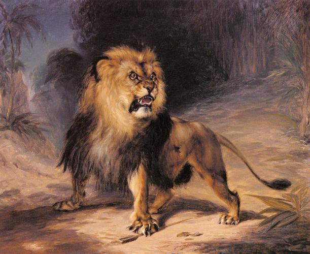 """""""A_Lion"""""""