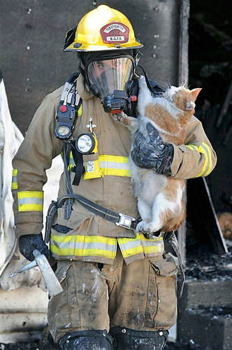 firefighters-rescue-cats-21