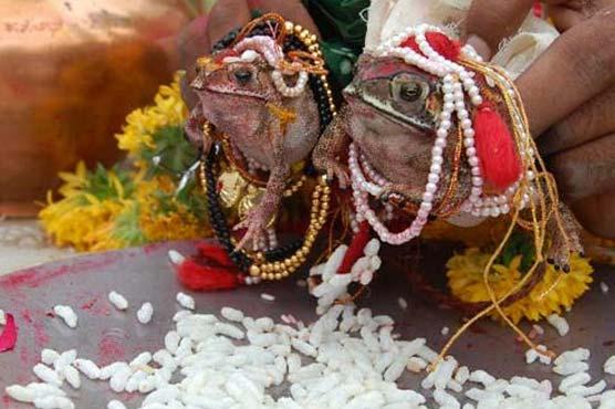 frog%20marriage%20india