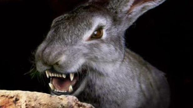demon-rabbit-lost-loot-spot
