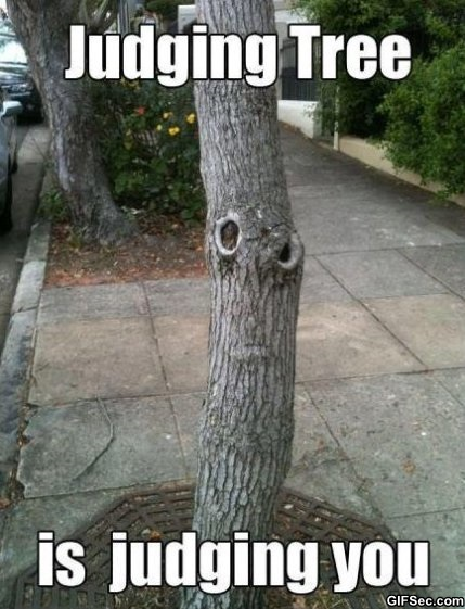 Judging-Tree-Is-Judging-You-Funny-Meme-Image