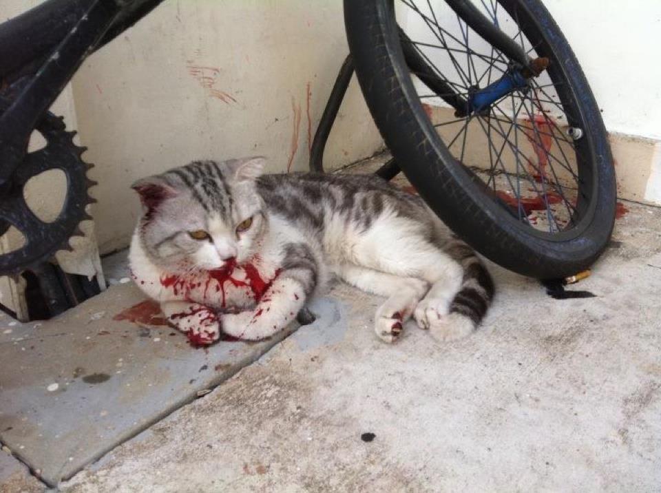 Cat%20death