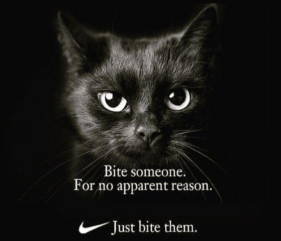 cat-bite-someone-no-apparent-reason-just-bite-them