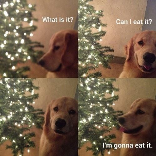meme-dog-what-is-it-can-i-eat-it-im-gonna-eat-it