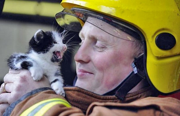 firefighters-rescue-cats-17