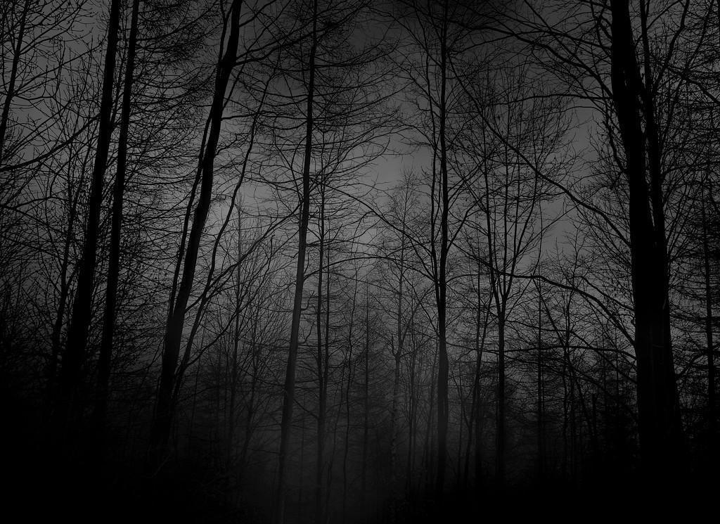 dark%20forest